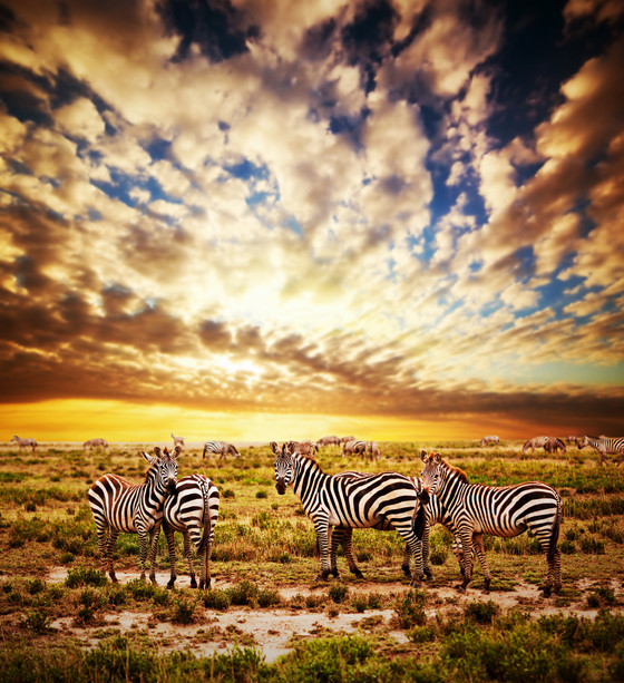 Africa photos that will make you want to be there Now!!