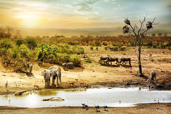 Dreamy scene of common South African safari wildlife animals together at sunset.jpg