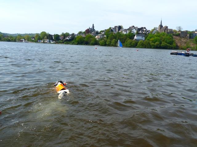 hinaus auf den See