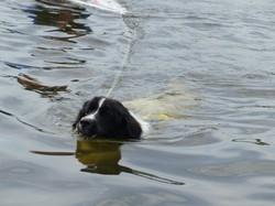 eine elegante Schwimmerin