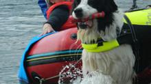 Ein spannender Tag am Wolfsee
