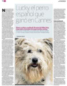 Lucky perro de cine de Rafael Casado ganador de la Palm Dog en Cannes 2015 a la mejor interpretación canina.