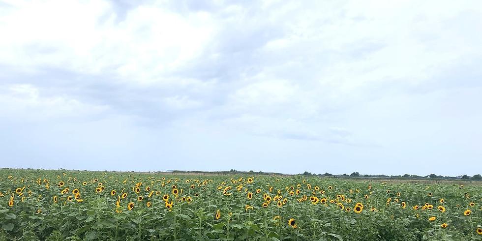 Sunflower Salutations (9/4)