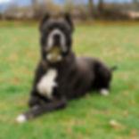Congo perro actor para publicidad cine y televisión.