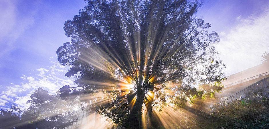 Awesome Tree Redux_sm.jpg