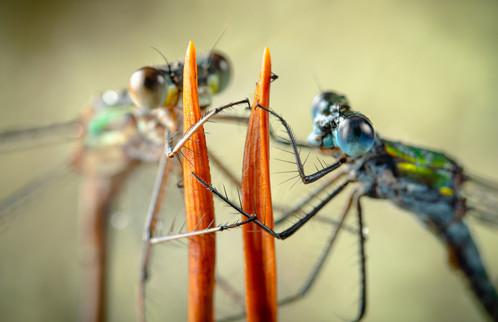 Plockepinn / Emerald Entanglement