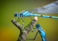 Par på Pinne / Two on a Stick