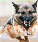 Dog2_edited.jpg