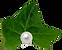 pearl_Leaf.png