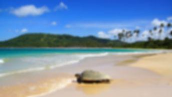 Sea turtle on Nacpan beach. El Nido.jpg