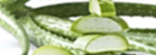 I prodotti Forever Living Products contengono gel di aloe vera puro e stabilizzato di ottima qualità