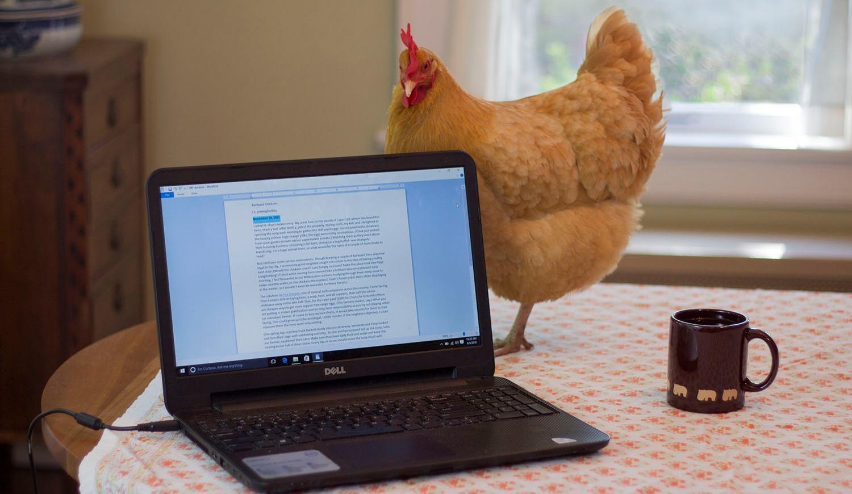 chicken_edited