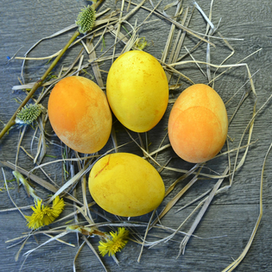 Naturligt färgade påskägg