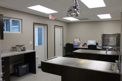 Dental suite and treatment area
