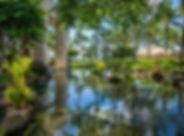 Tropical Pool.jpg