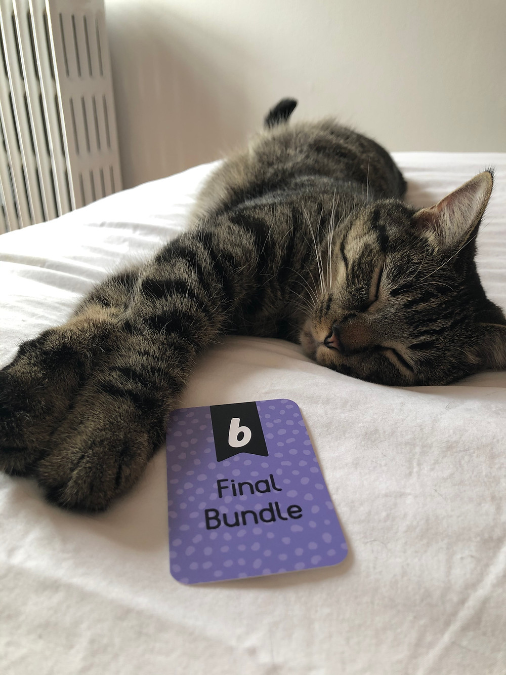 Kitten with a card that says Final Bundle