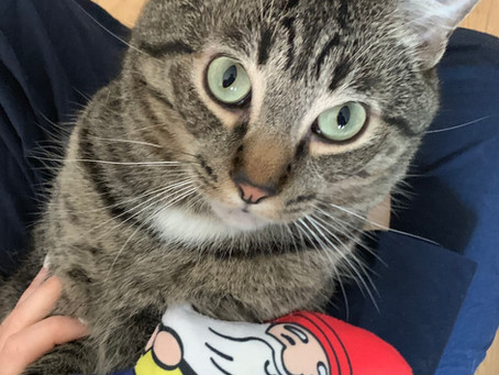 Pets love Bundle Games and Pronk Pets!