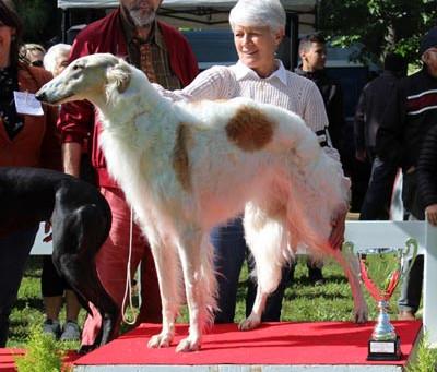 De nouveau, Jasmine monte sur le podium du Best In Show !