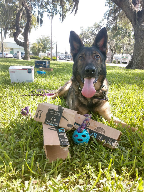 Obedience classes, training classes, good dog