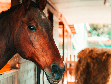 Do you know what is the first cause of death for sport horses?