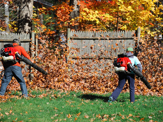 Milford, CT Fall Clean-Up & Leaf Removal Service | Landscape Maintenance