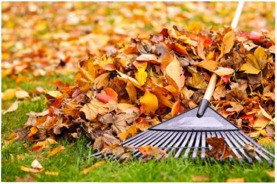 Fall Clean-Up and Leaf Removal - Stratford, CT