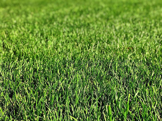 Professional Landscaping and Lawn Care Services in New Haven County, CT