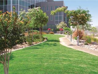Commercial Landscape Management - Property Maintenance - Stratford, CT