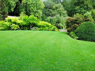 Stratford, CT - Tree, Shrub, Plant Installation & Landscape Design
