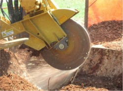 Tree Stump Grinding & Removal Services - Fairfield & New Haven County, CT