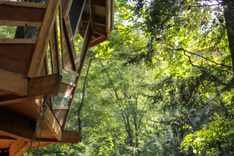 tree house, red river gorge