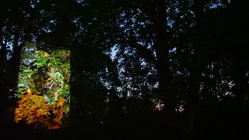 image projection, overgrown