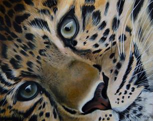 Leopard Cub in Oil