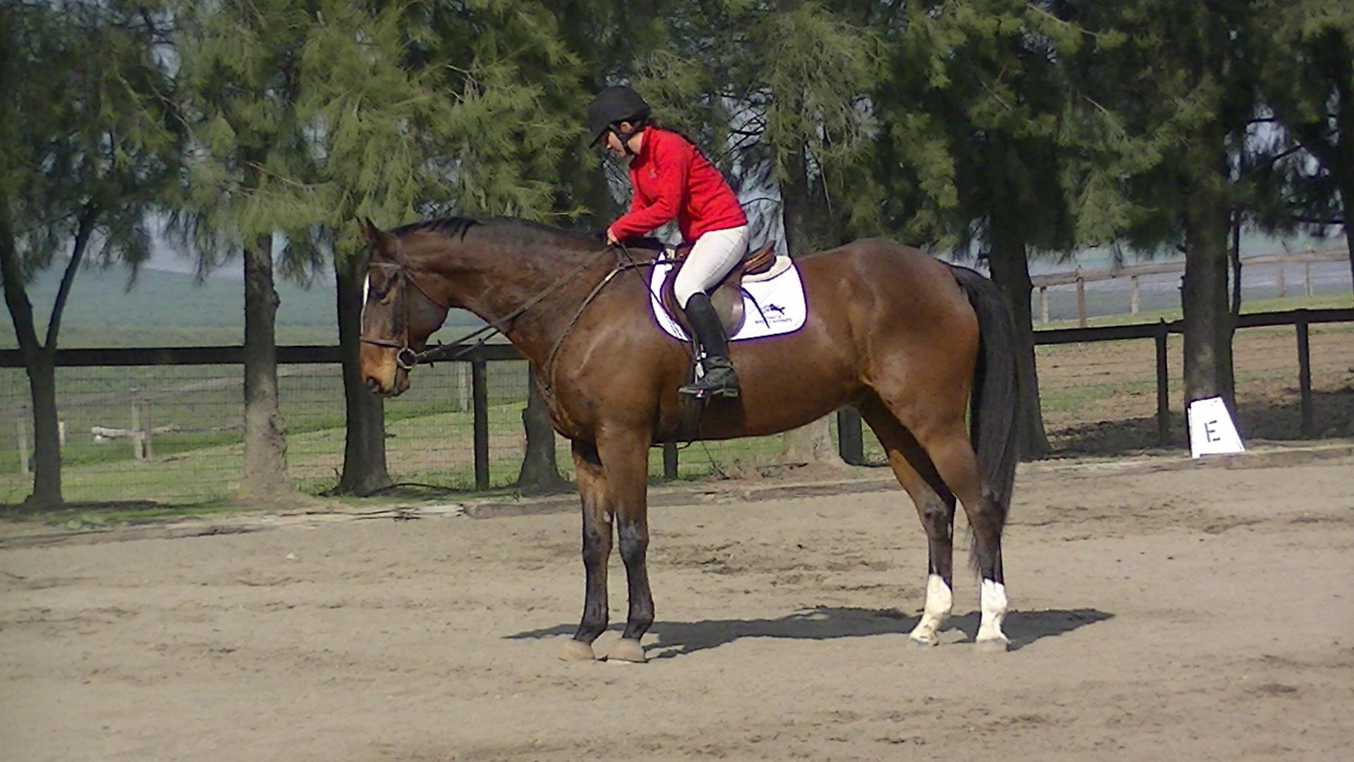 Rio S Rainbow Aka Oliver Gracesporthorses2