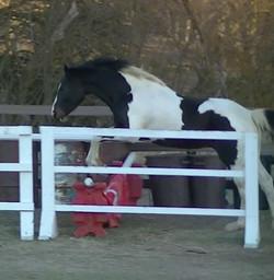 Stallion jump gknees low.JPG
