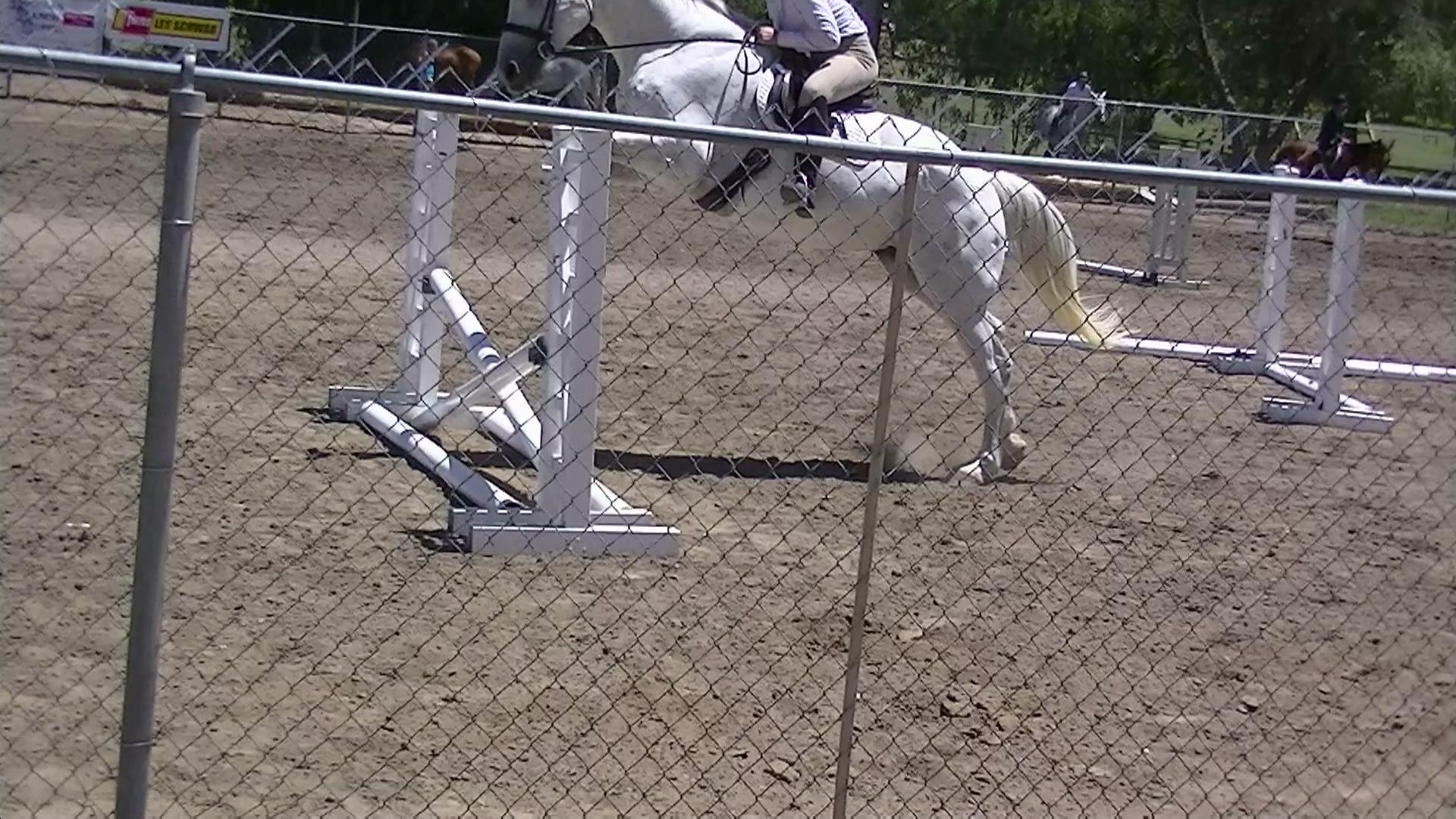 Blanca jumping.JPG
