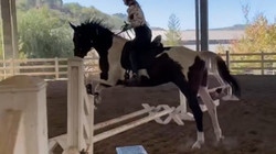 """Artemis w/5'4"""" rider"""