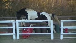 Stallion jump square.JPG