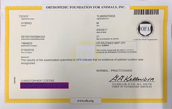 Teddy OFA Patella Certificate.jpg