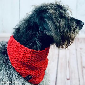 My Pepper loves rocking his new bandana