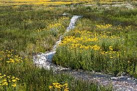 Crowley Lake Stream