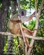 Lemur Chills