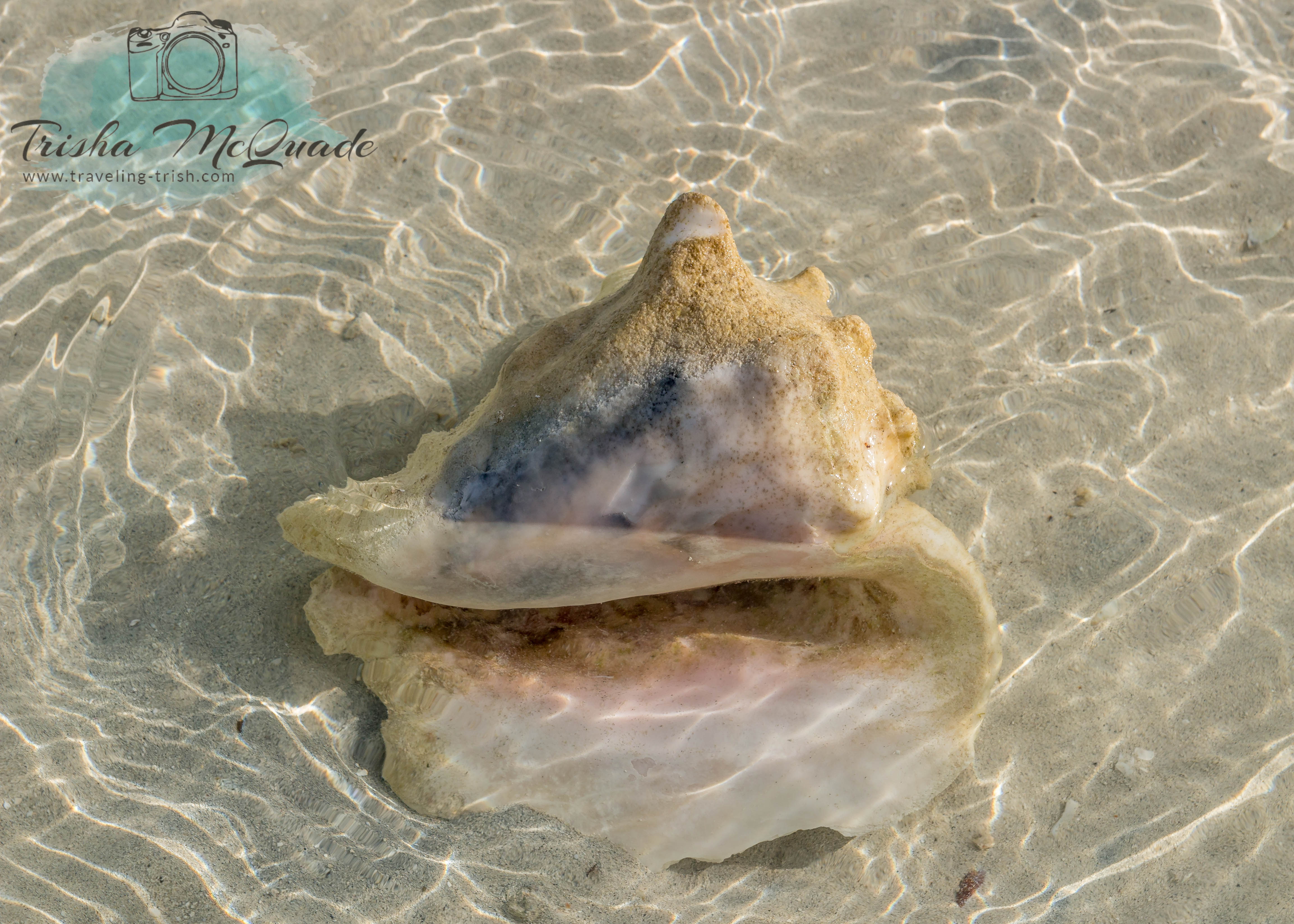 Water Conch
