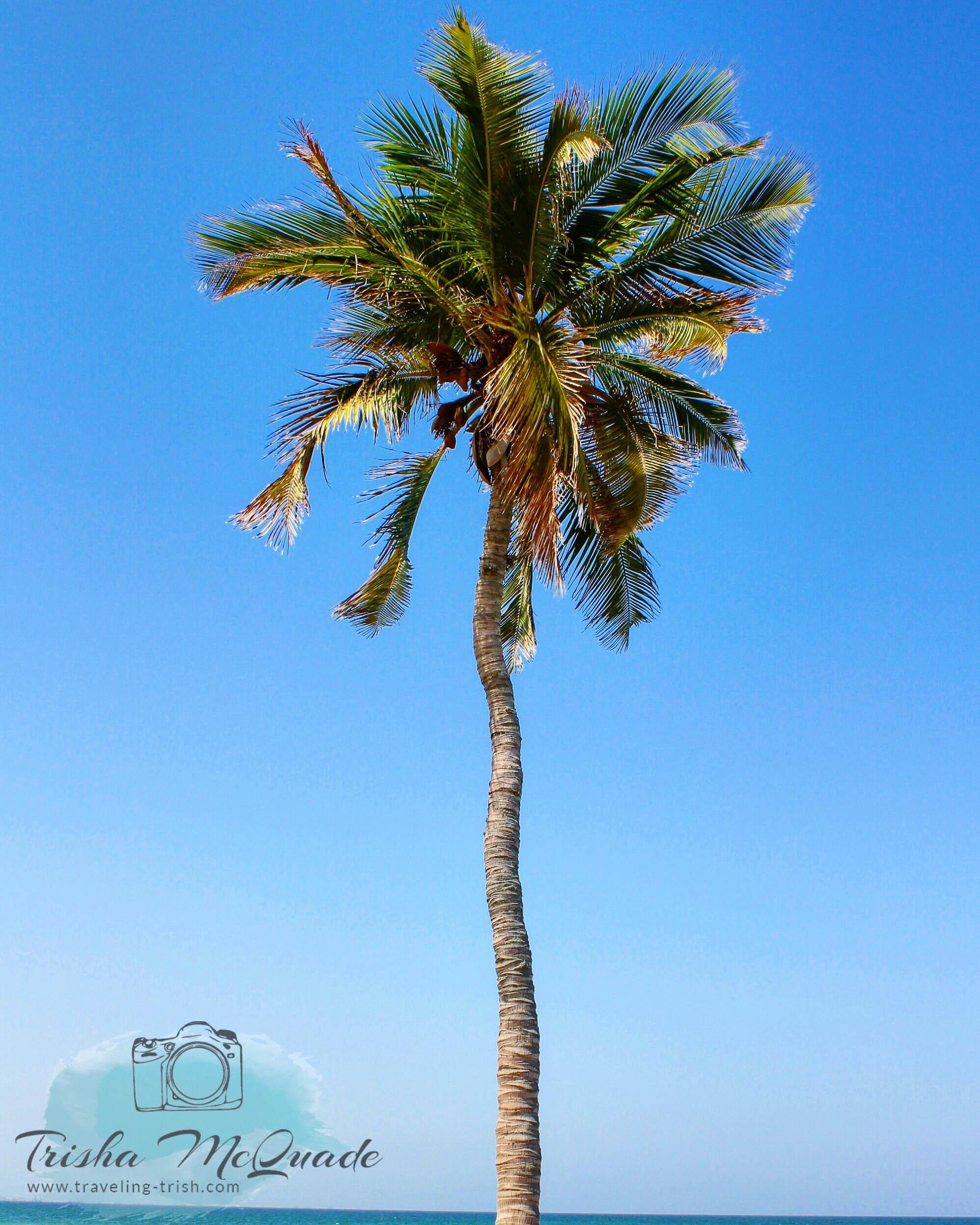 Lazy Palm