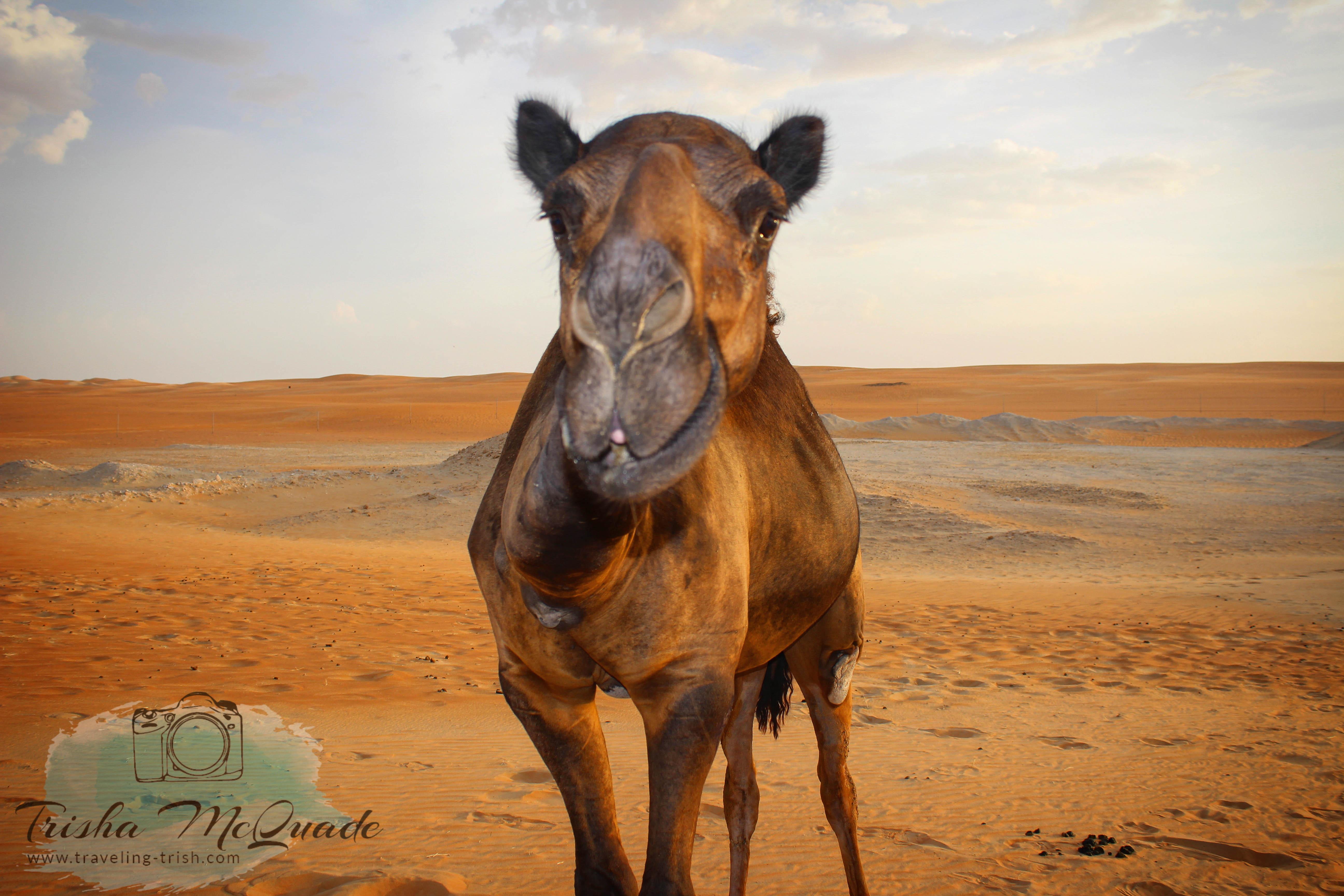 Camel Bomber