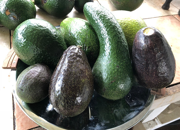 Avocado - Kona Varieties - 2 fruit