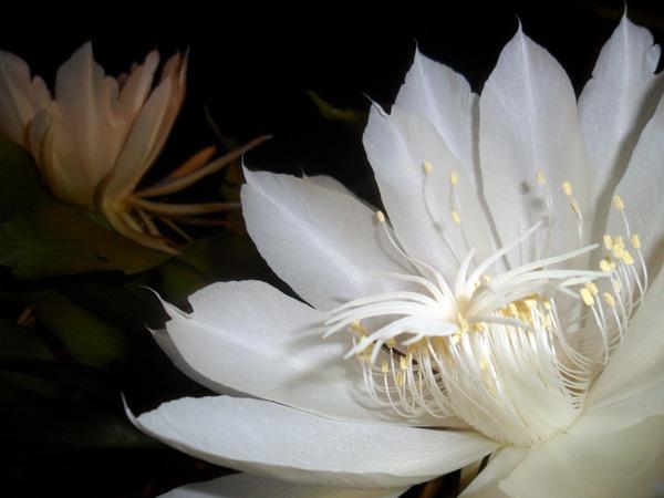 Fleurs et plantes la reunion