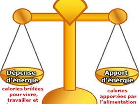 Balance énergétique, métabolisme et perte de poids