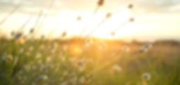 summer-sun-sunset-yellow-447440.jpeg