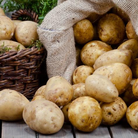 Potato Germination Information